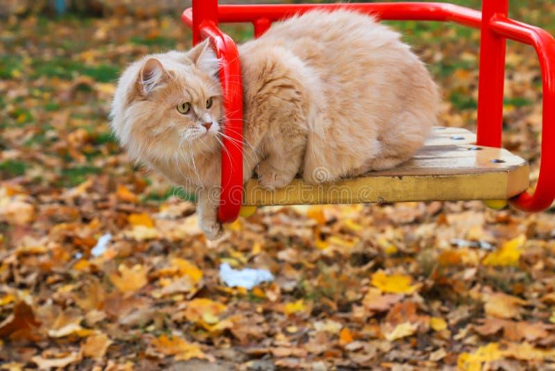 Gato vermelho grande que senta-se no balanço de uma criança no parque do outono no fundo das folhas caídas foto de stock