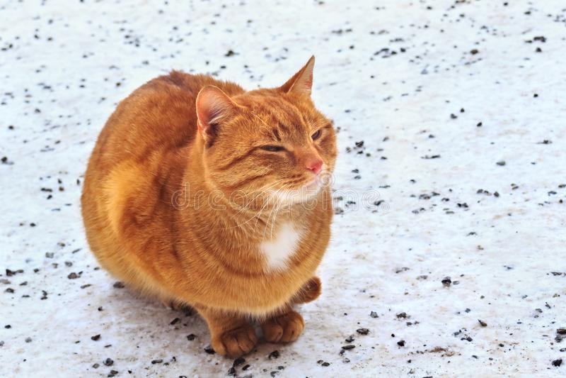 Gato vermelho macio bonito fotos de stock