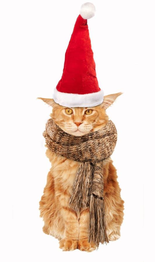 Gato vermelho Maine Coon In um chapéu e um lenço de Santa Claus em um fundo branco fotos de stock