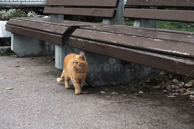 Gato vermelho no suportes listrados na estrada imagens de stock royalty free