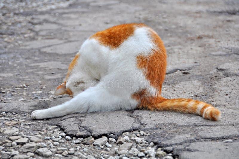 Gato vermelho que lava-se fotografia de stock