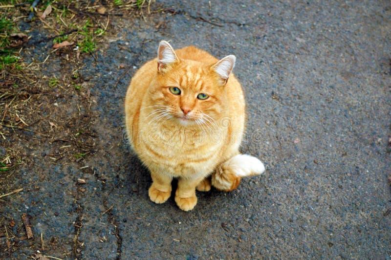 Gato vermelho triste em uma rua fria imagem de stock royalty free