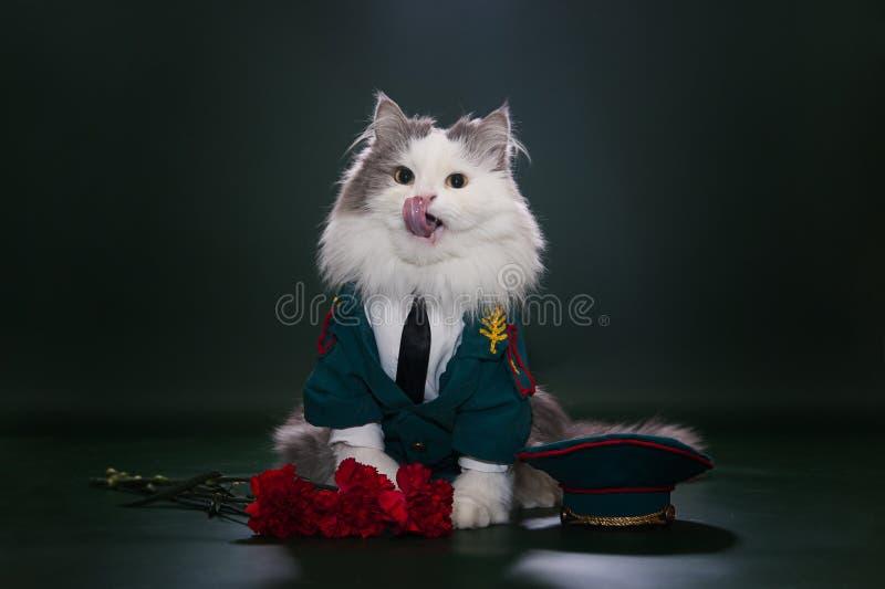 Gato Vestido Como General Foto de archivo libre de regalías