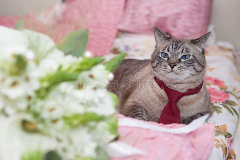 Gato vestido como novio foto de archivo