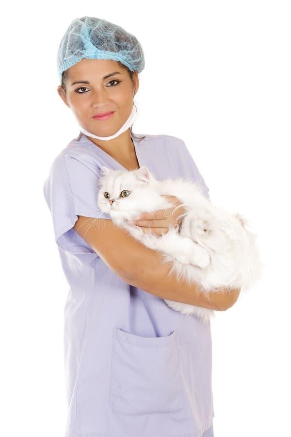 Gato veterinário da terra arrendada fotografia de stock royalty free