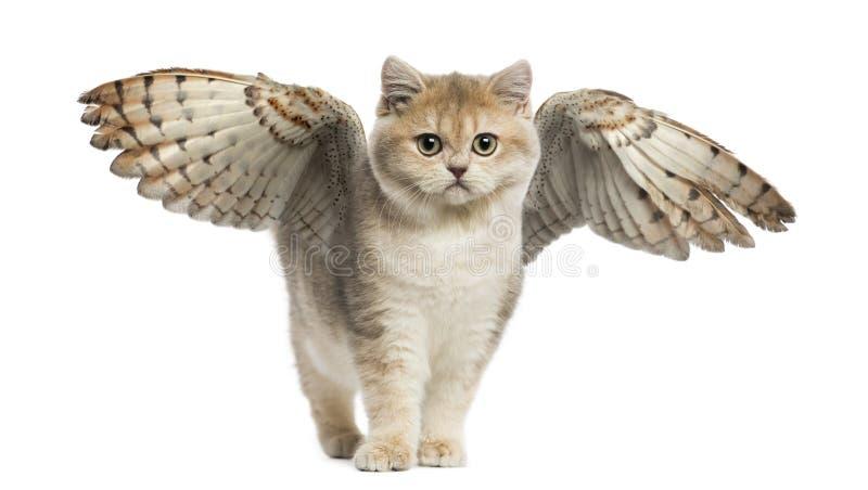 Gato voado fotografia de stock royalty free