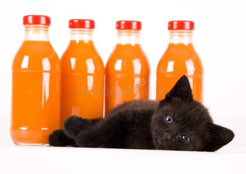 Gato y bebida anaranjada imagen de archivo libre de regalías