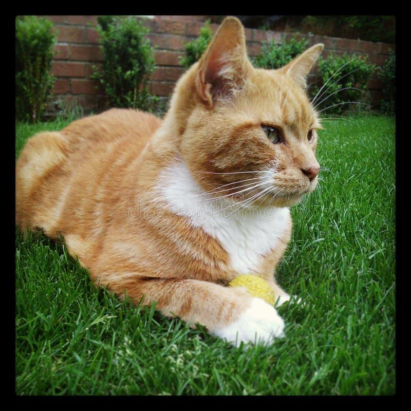 Gato y bola fotografía de archivo libre de regalías