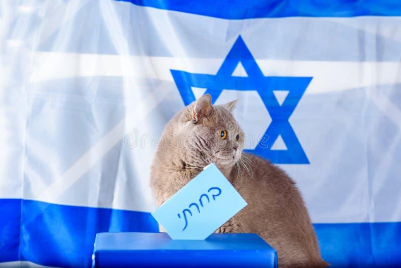 Gato y caja lindos del voto el d?a de elecci?n sobre fondo de la bandera de Israel fotos de archivo