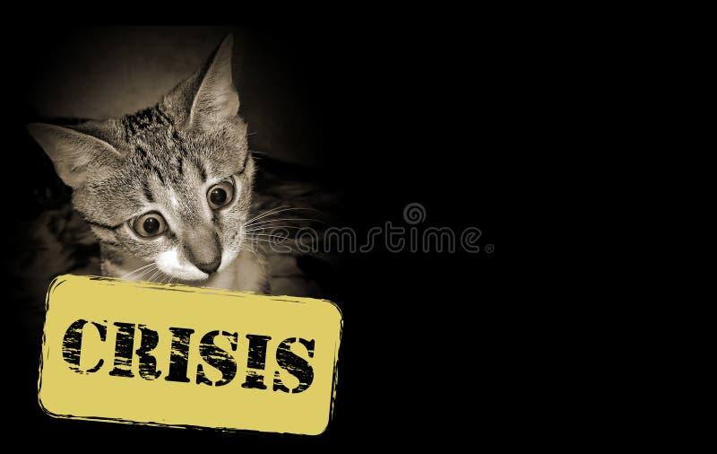 Gato y crisis económica imagenes de archivo