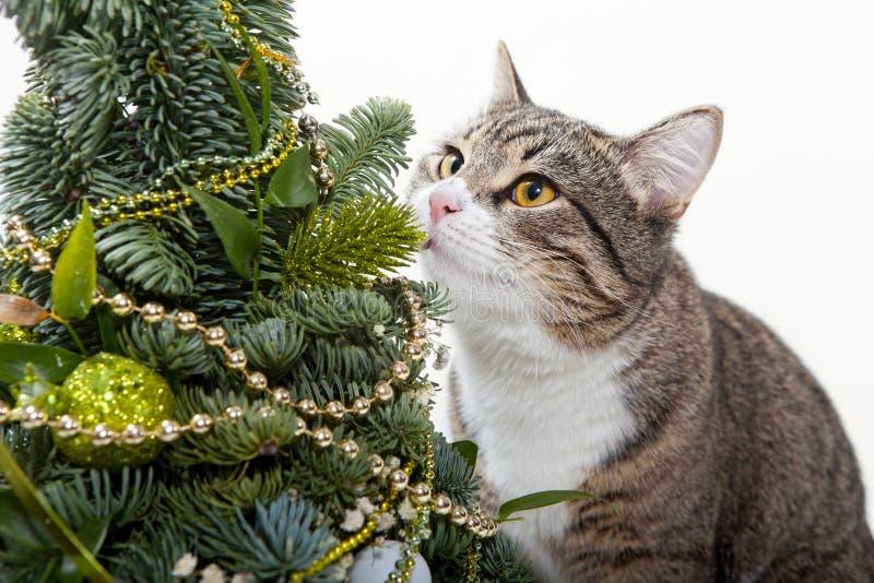 Gato y el árbol de navidad imagen de archivo libre de regalías