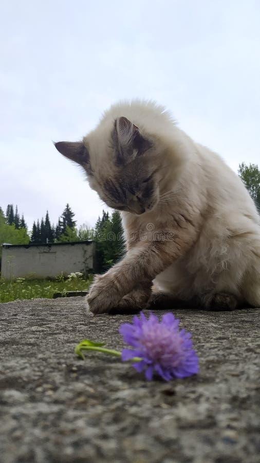 Gato y flor lindos felices foto de archivo