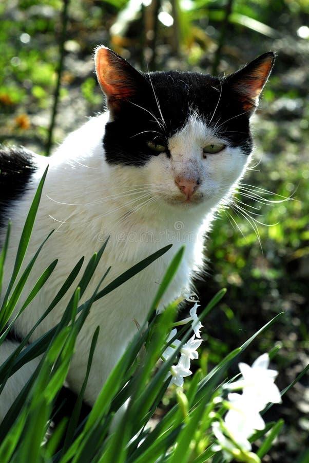 Gato y flores 2 fotografía de archivo libre de regalías