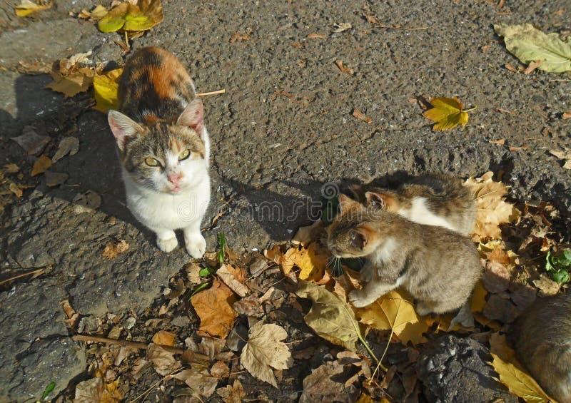 Gato y gatitos imagenes de archivo
