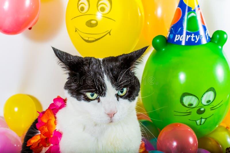 Gato y globos coloridos fotos de archivo