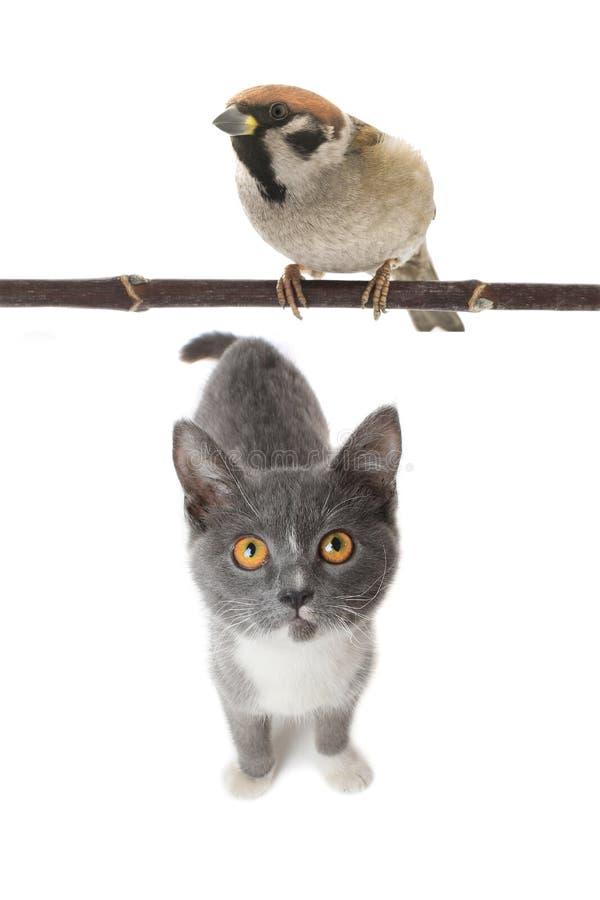 Gato y gorrión grises imagen de archivo libre de regalías