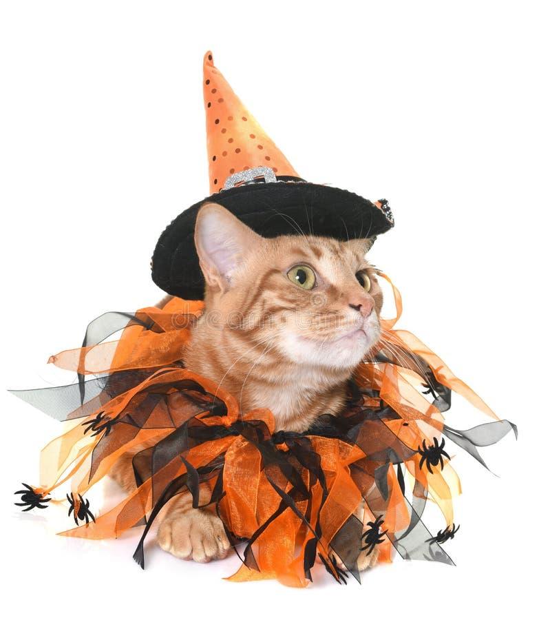 Gato y Halloween del jengibre imagenes de archivo