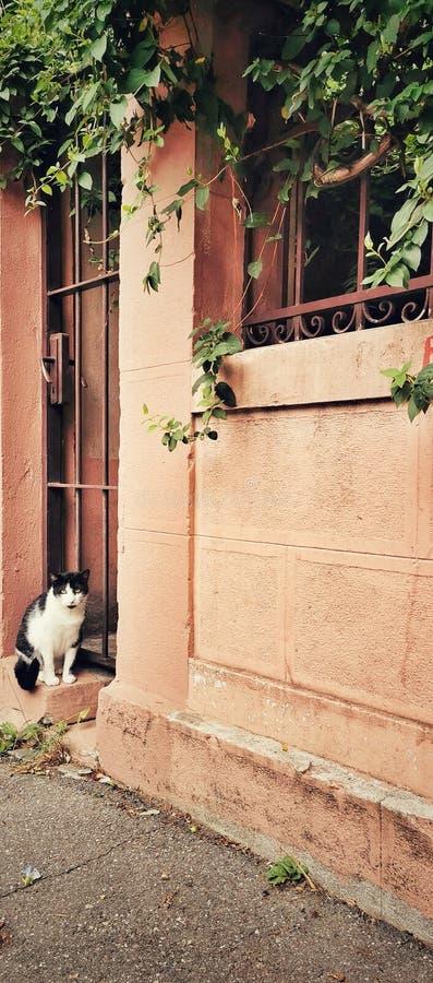 Gato y la puerta imágenes de archivo libres de regalías