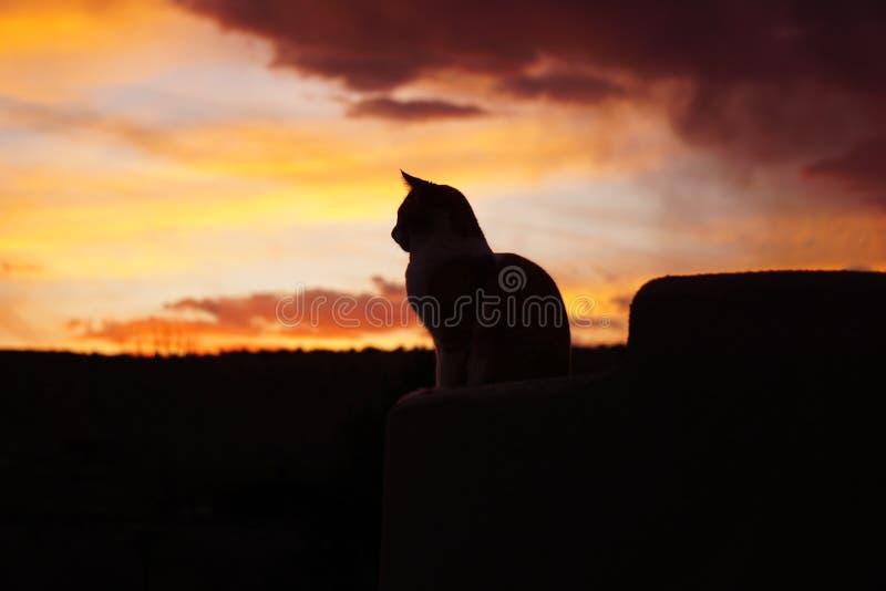 Gato y la puesta del sol imagen de archivo libre de regalías