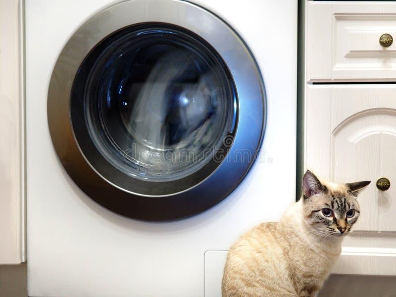Gato y lavadora imagen de archivo libre de regalías
