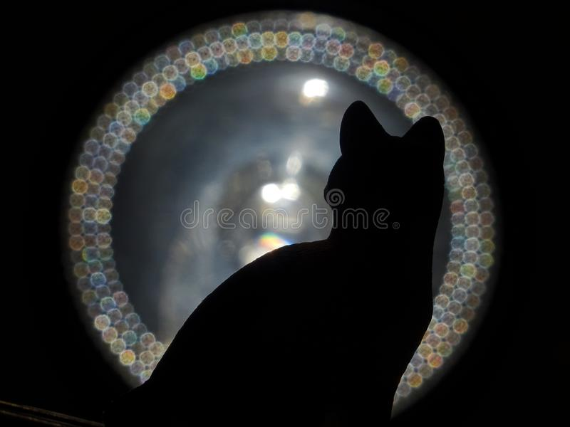 Gato y luz fotografía de archivo
