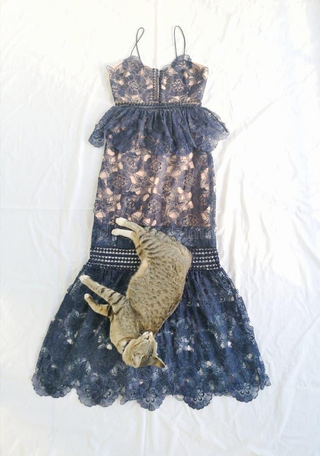 Gato y moda imagen de archivo libre de regalías