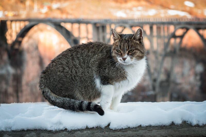 Gato y nieve imagen de archivo libre de regalías
