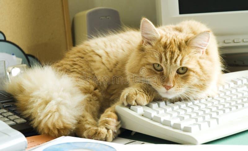 Gato y PC fotografía de archivo libre de regalías
