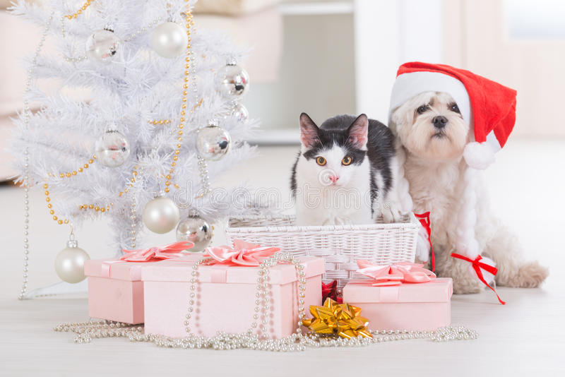 Gato y pequeño perro que llevan el sombrero de Santa Claus fotos de archivo