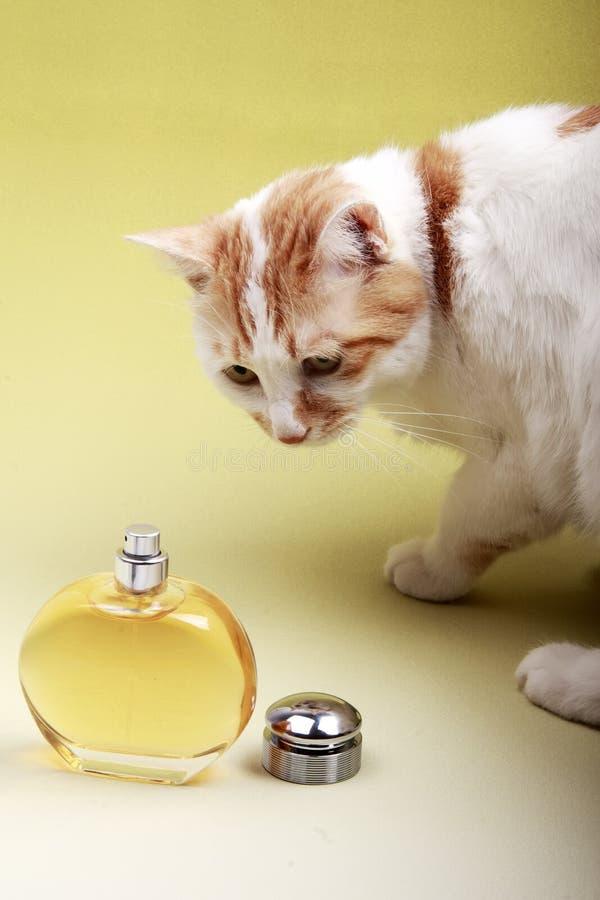 Gato y perfume fotos de archivo libres de regalías
