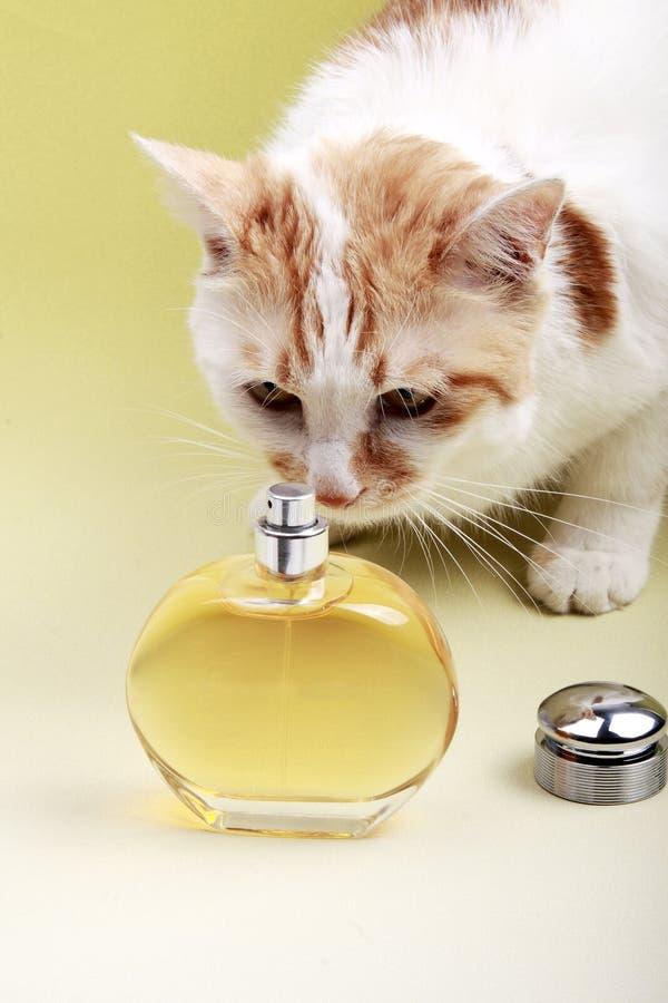 Gato y perfume imagen de archivo libre de regalías