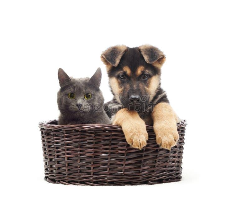 Gato y perrito en una cesta de la paja fotos de archivo