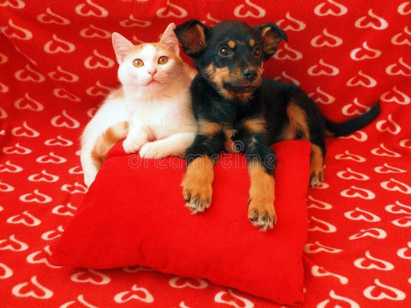 Gato y perro: amistad foto de archivo