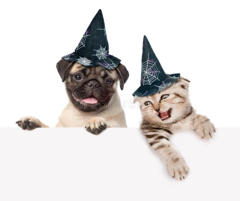 Gato y perro con los sombreros para Halloween que mira hacia fuera debido al cartel En el fondo blanco fotografía de archivo