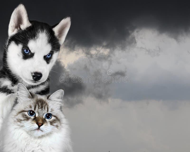 Gato y perro delante de un cielo oscuro, humor ansioso triste imagen de archivo