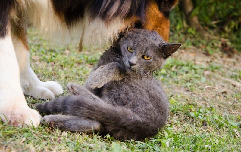 Gato y perro divertidos fotografía de archivo