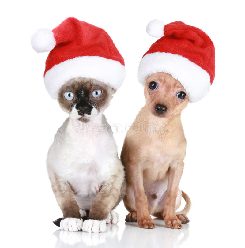 Gato y perro divertidos en sombreros de la Navidad foto de archivo libre de regalías