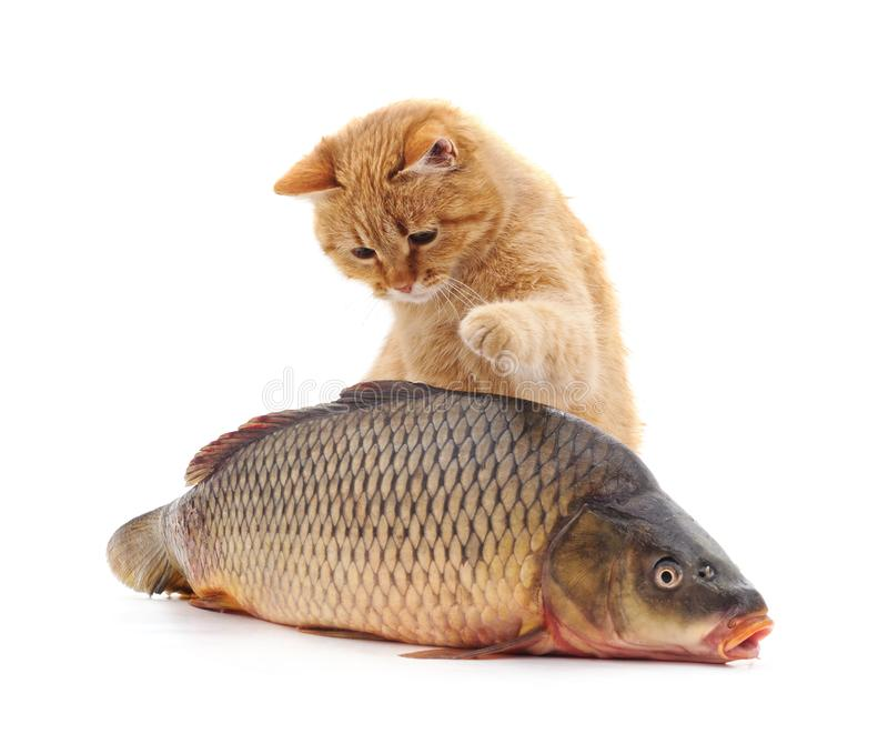 gato y pescados fotografía de archivo