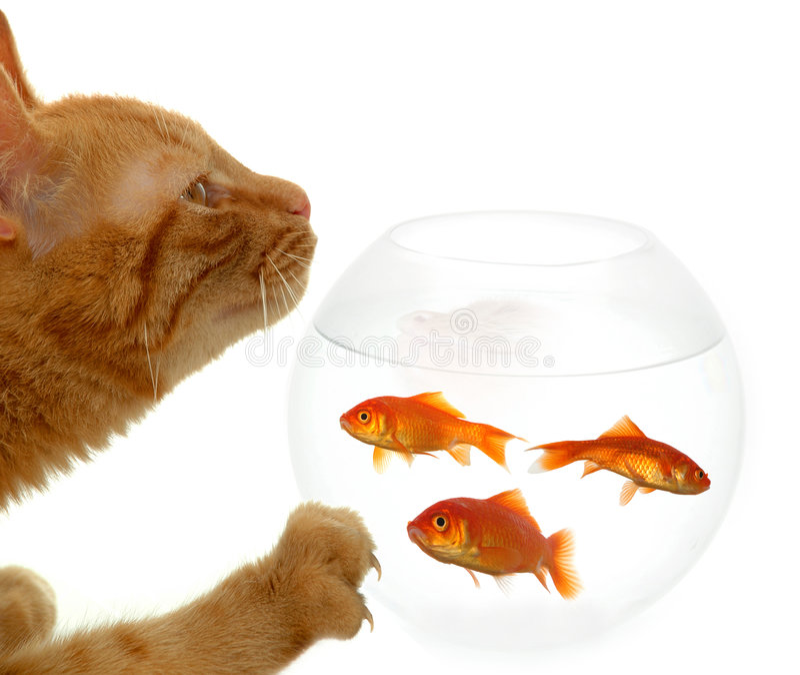 Gato y pescados fotografía de archivo libre de regalías