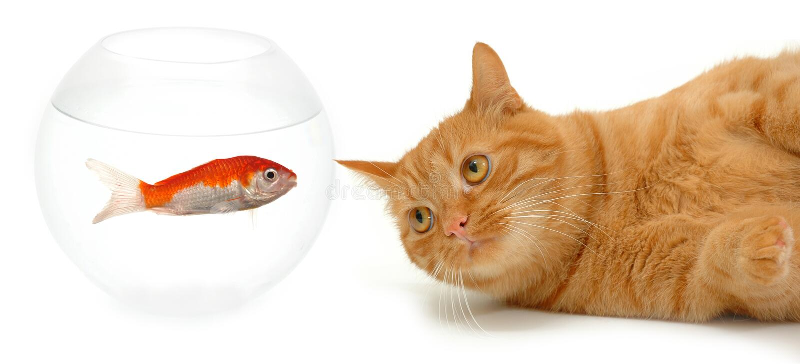 Gato y pescados fotos de archivo