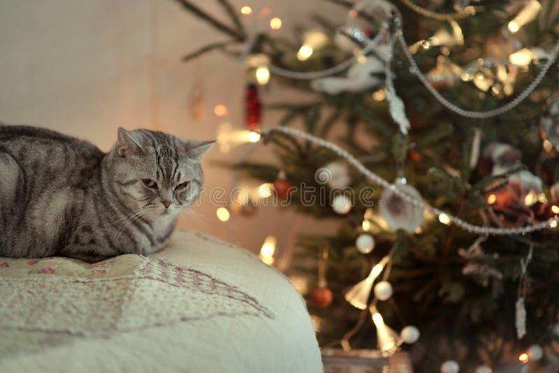 Gato y raspa de arenque británicos imagen de archivo