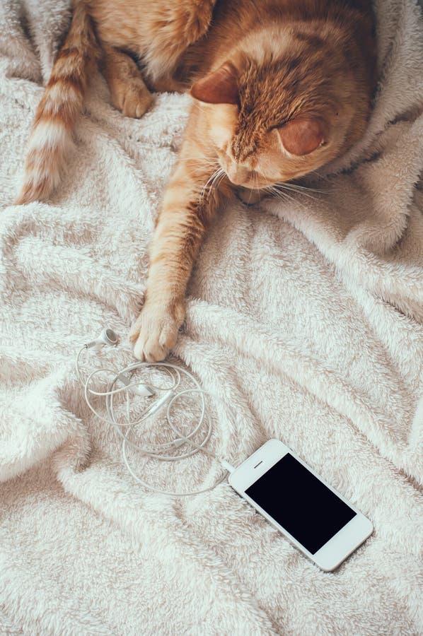 Gato y smartphone fotografía de archivo