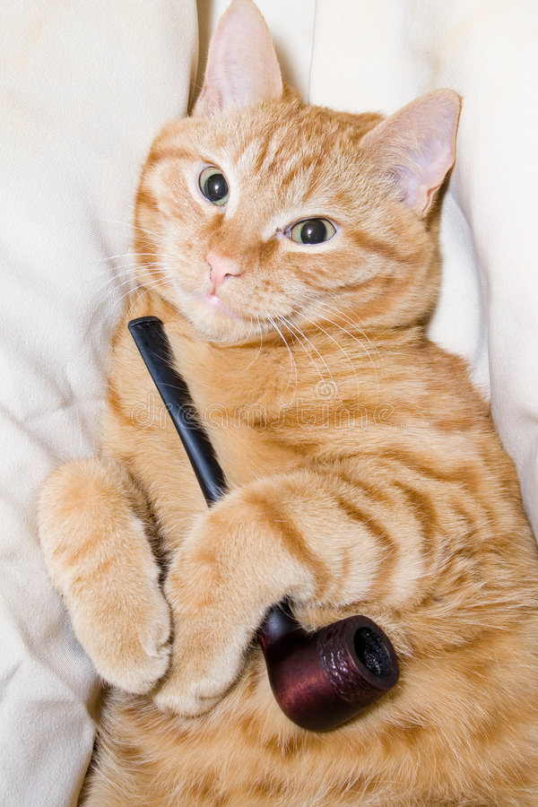Gato y tubo fotos de archivo libres de regalías