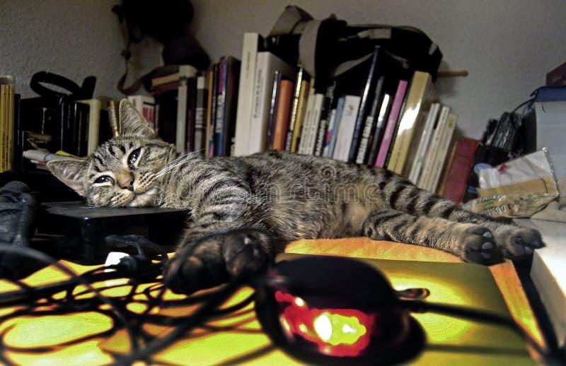 Gatopardo heureux se couchant à la chaleur de l'unité de disque dur et des livres photos libres de droits