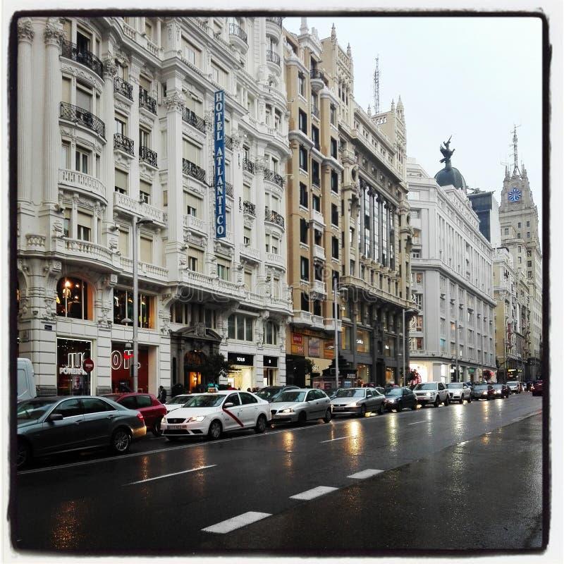gator royaltyfria bilder