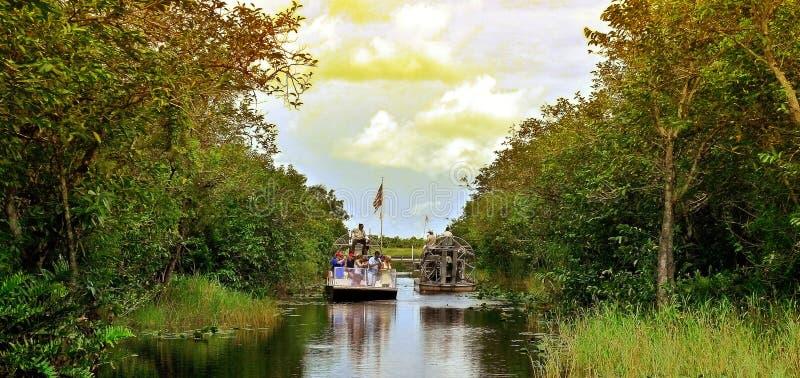 Gator park. At florida everglades royalty free stock images