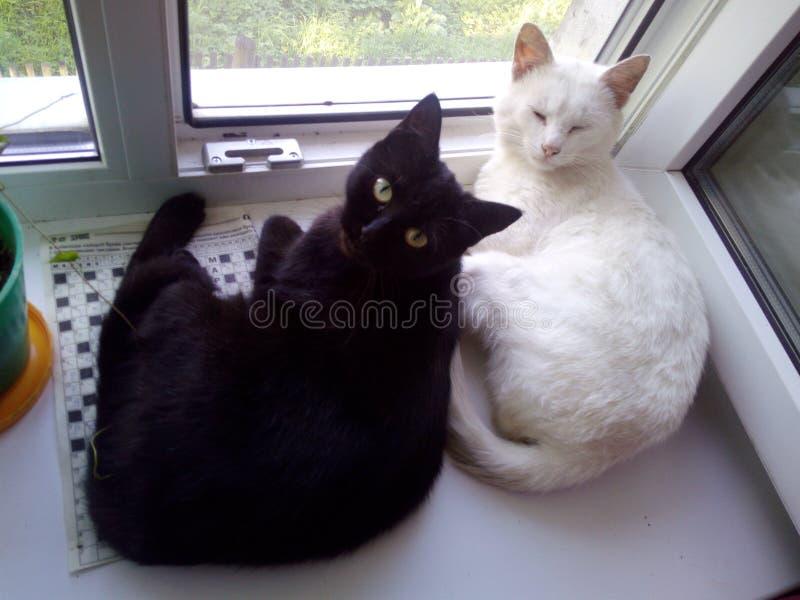 gatos imágenes de archivo libres de regalías