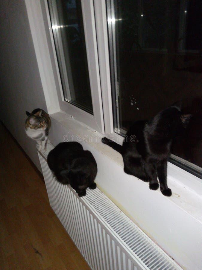 3 gatos imagem de stock royalty free