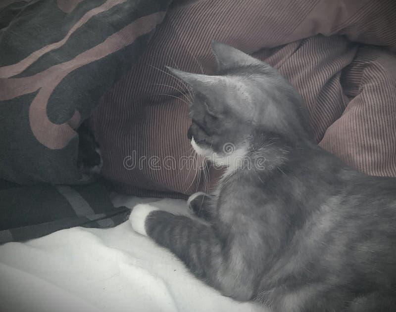 gatos fotos de archivo