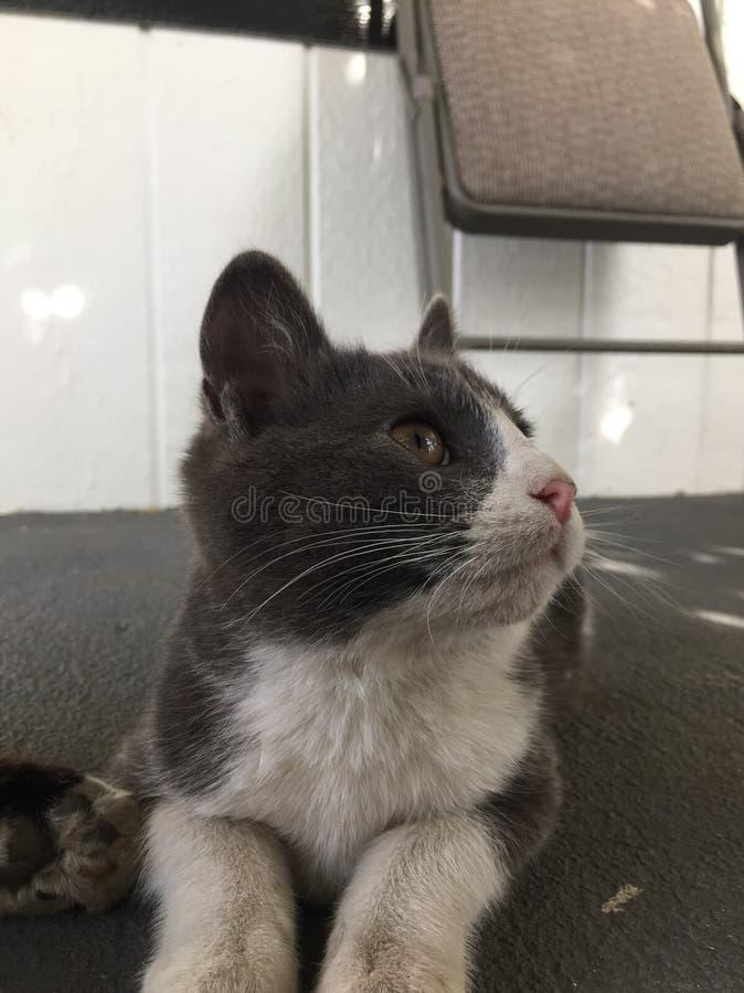 gatos fotos de archivo libres de regalías